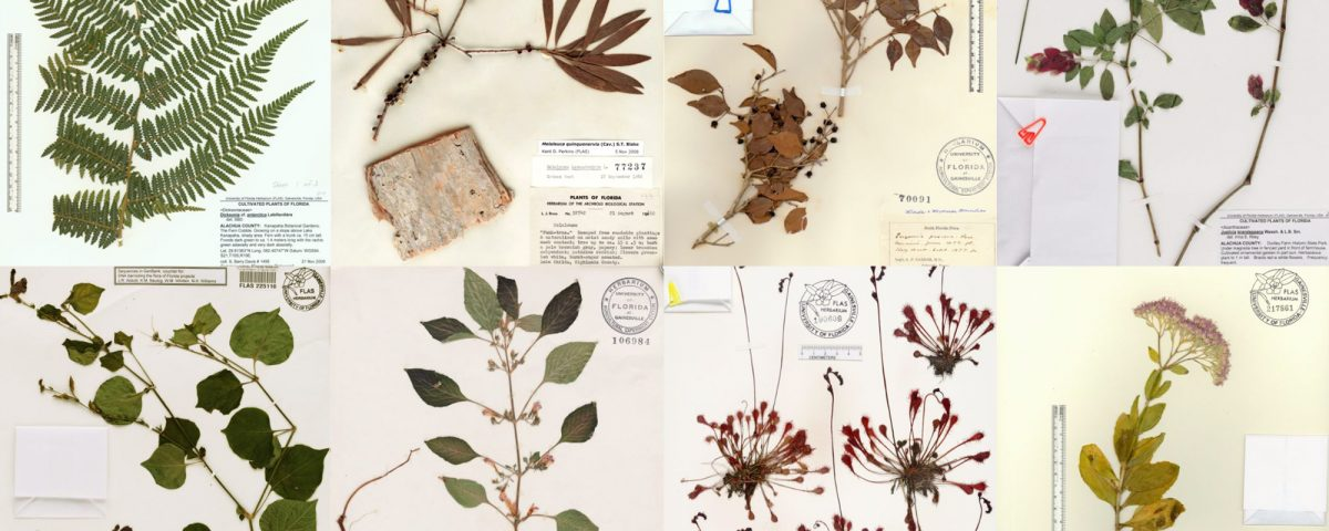 Google image result for herbarium