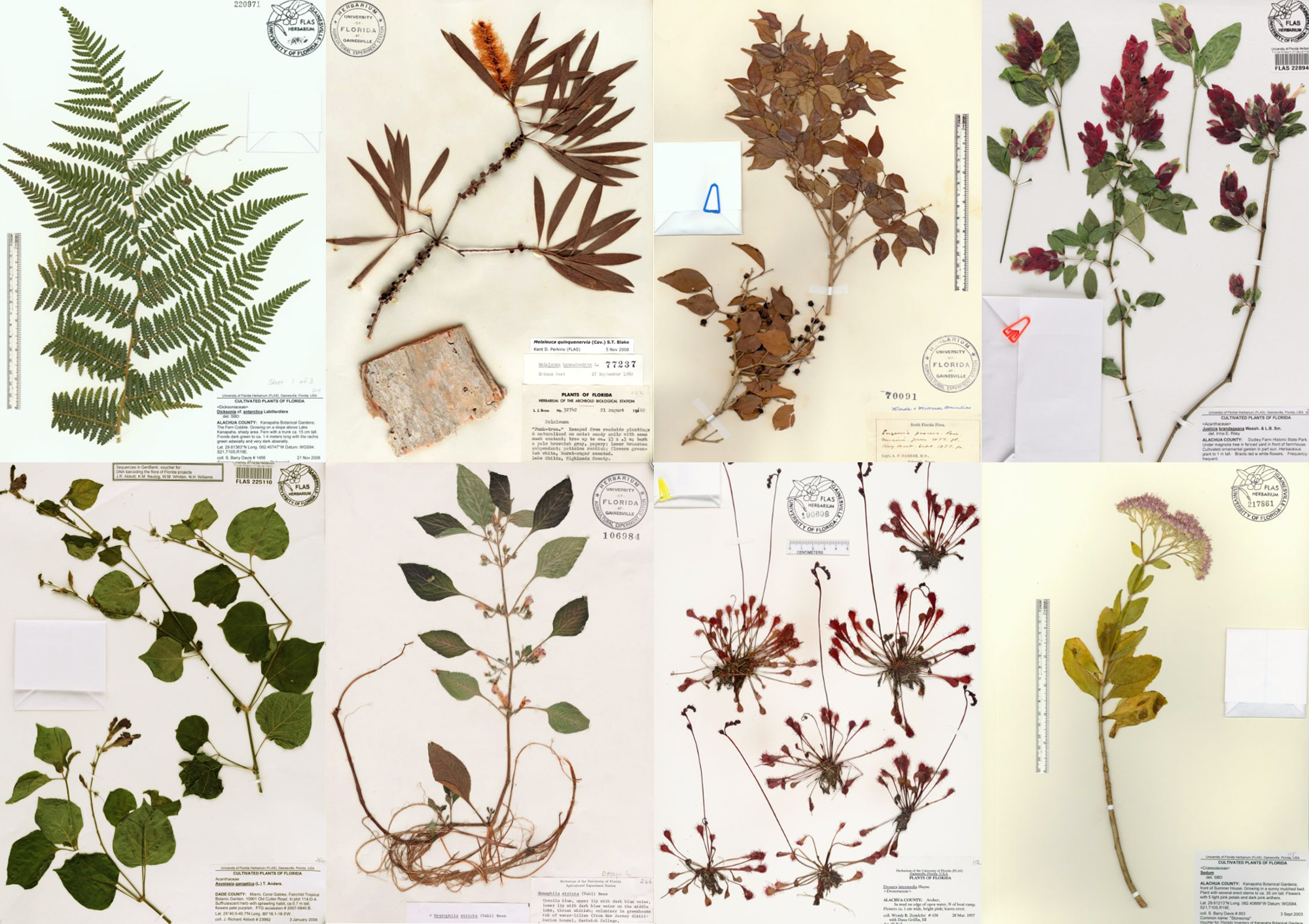 How To Make Your Own Herbarium The Best Organic Herb Tea